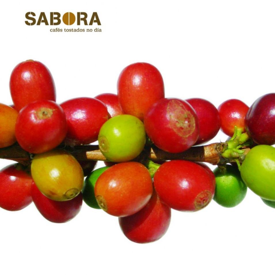 Frutos del cafeto de donde nace el café
