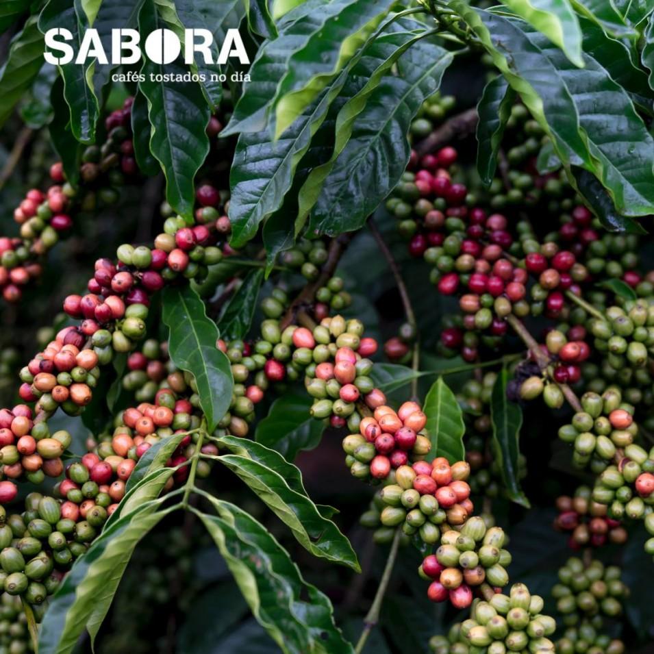 Equatorial forests - origin of coffee