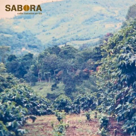 Café de Kenia cultivado en altura.